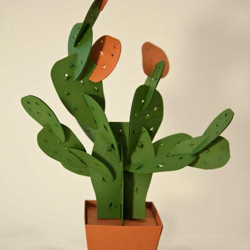 cactus di carta - fico d'india