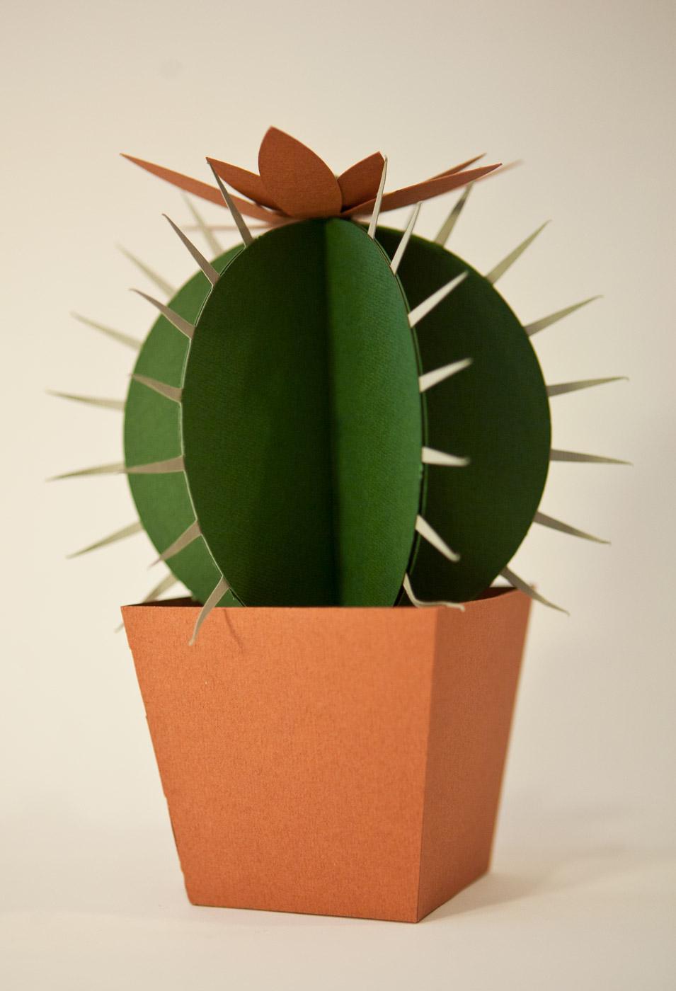 Cactus di carta da montare - Il Cuscino della Suocera